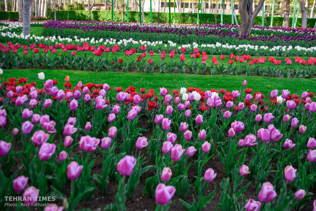 Virtually explore tulips in full bloom in park closed over coronavirus