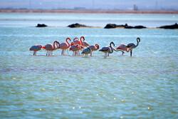 EU, UNDP allocate €10m to revive Iran's Hamoun wetland