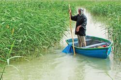 Hamoun wetland