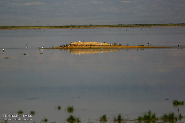 Discover a paradise of migratory birds in the heart of barrenness!