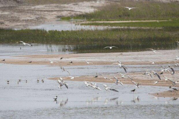 Allah-Abad wetland hosting 30 bird species once again