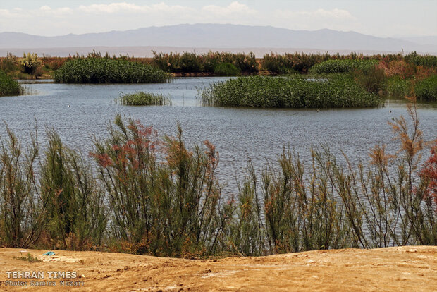 Home sweet home: thousands of migratory birds land in Iran's Allah-Abad wetland