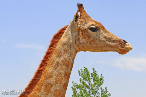 Experience wildlife in safe, friendly and educational environment near Tehran