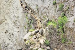 Nomads on arduous mountainous path