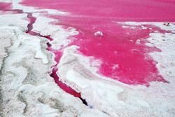Pretty in pink: Maharloo Lake lures nature lovers