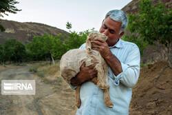 Keramat Garden, a place for helping injured, orphaned wildlife