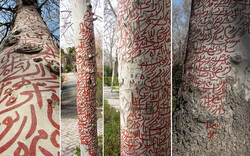 This combination photo shows a number of inscriptions by land artist Fereshteh Aalamshah on trees in Tehran's Laleh Park during an environmental art festival in 2011.