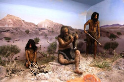 Neanderthal-era tooth to go on show in Qazvin
