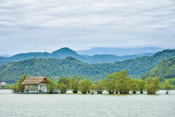 Dreamy cottages, floating trees and tranquility of wetland atmosphere