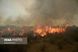 Wildfire burns 340ha of Miankaleh wildlife sanctuary