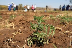 FAO strengthens agricultural drought monitoring, warning systems in Iran