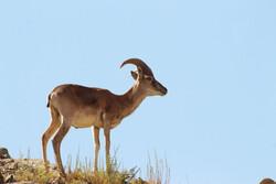 DOE draws up plan on biodiversity, habitat protection