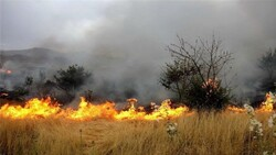 Anthropogenic wildfire extinguished in Hamoun wetland