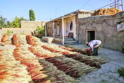 Broom making helps villagers make a living