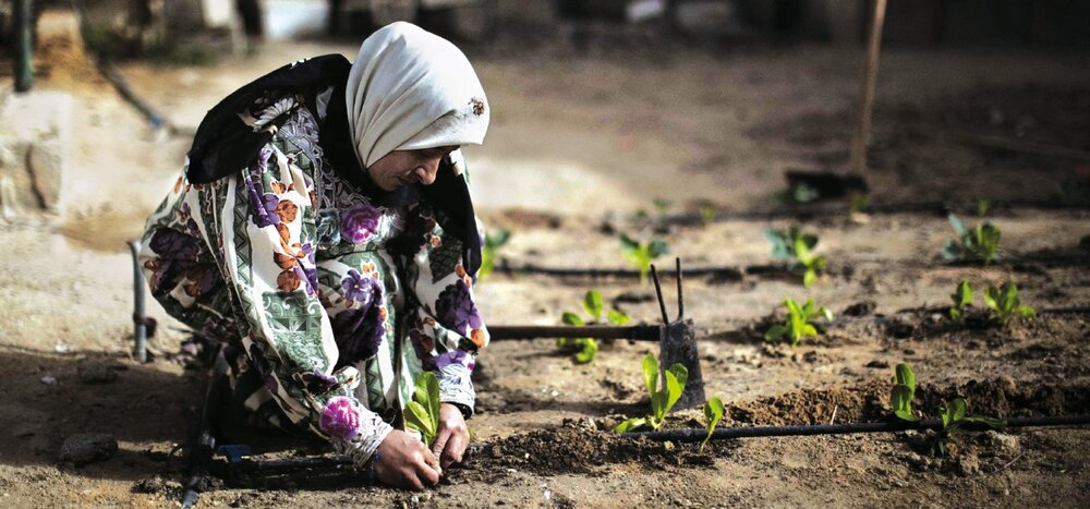 Iran calls for collective response to contain COVID-19 effect on food, agriculture