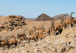 Semnan Habitat where endangered species depend on to survive