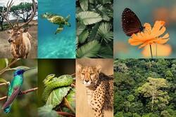 COVID-19 has given a fillip to biodiversity