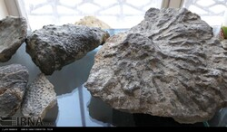 Museum of Rocks and Fossils in Sangsar