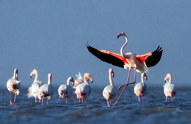 Golestan wetlands hosting first flocks of migratory birds