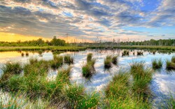 Wetlands: world's most dynamic ecosystems