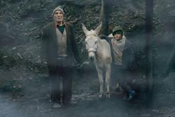 """""""Cinema Donkey"""""""