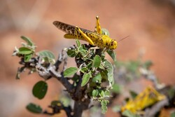 Iran receives new equipment to fight desert locust
