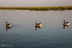 Wetlands facing debilitation