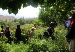 Cultural-rich Fars province takes step to boost agritourism