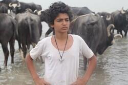 """The American Bull"" by Iranian filmmaker Fatemeh Tusi."