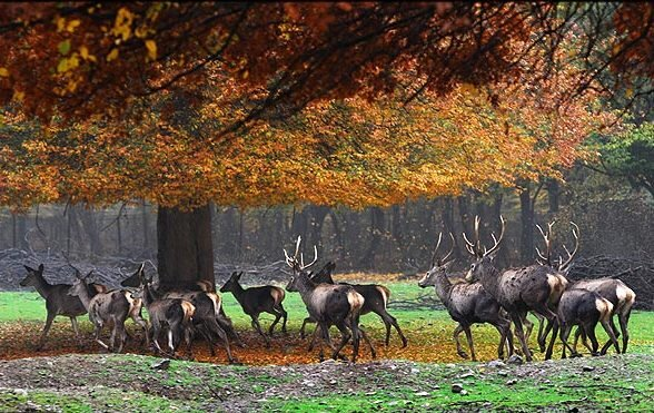 Electronic protection comes to Golestan National Park