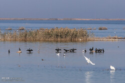 Campaign starts to protect migratory birds in Hour al-Azim wetland