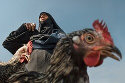 """Chicken"" by Mehdi Kazemi Bumeh won the FIAP Gold Medal in the People section of the 2nd Ala Archa International Exhibition of Photography in Kyrgyzstan."