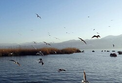 Jazmourian wetland hosting flocks of migratory birds