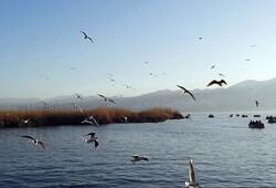 Jazmourian wetland hosting flocks of migratory birds