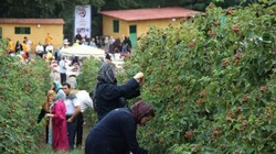 Lush Golestan province to extend support for agritoursm