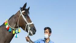 Abadan to host Arabian horse festival