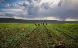 FAO helps Iranian farmers to improve productivity