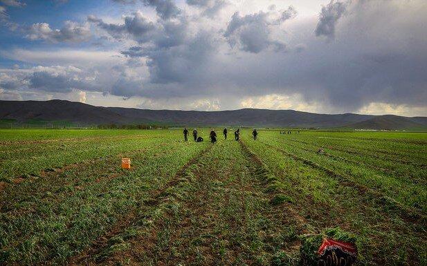FAO helps Iranian farmers to improve productivity