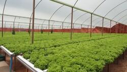 Greenhouse development in Fars Province on agenda