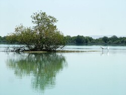 Mangrove forests at serious risk of disappearing, loss of species