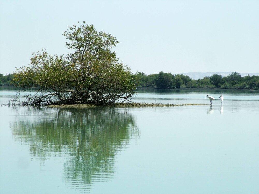 Iran-mangroves