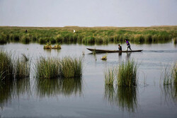 Shadegan wetland becoming a better habitat for migratory birds