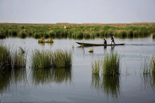 Shadegan wetland becoming a better habitat for migratory birds