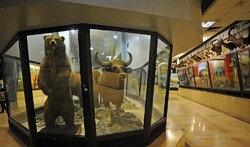 Iran's remarkable biodiversity museum