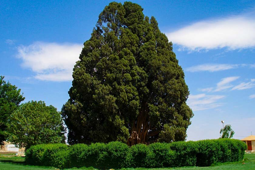 Unique trees of Iran: important plant genetic resources