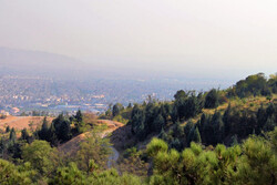 Major afforestation project inaugurated in Tehran