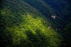 4,500 ha of Golestan forests undergo reforestation