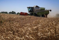 Budget for supporting production of strategic crops up 82% this year