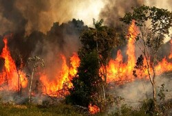 Wildfire prevention regulations to be prepared