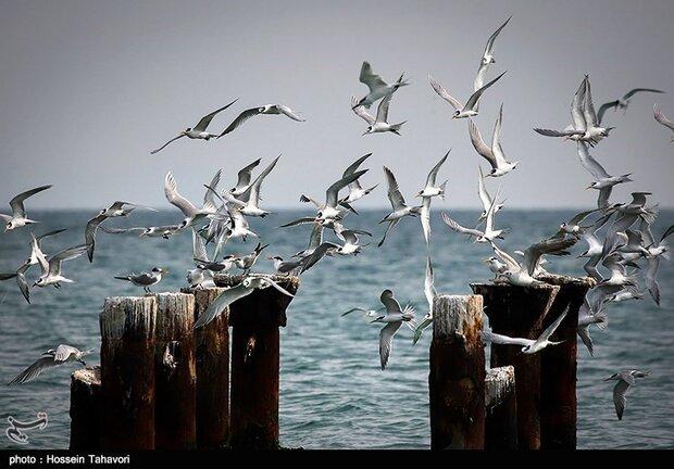 Kish Island hosting 30% of Iran's bird species
